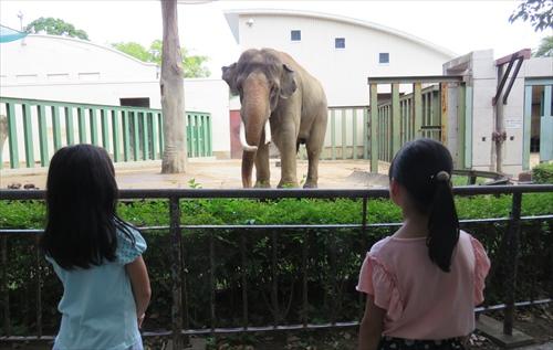 2018.7.30 王子動物園3.JPG