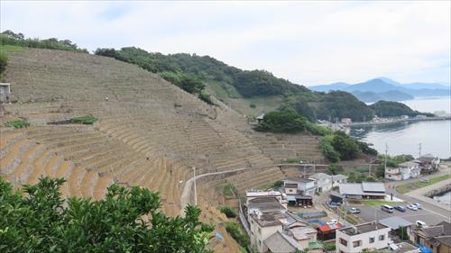 2019.7.24 段々畑 9.JPG